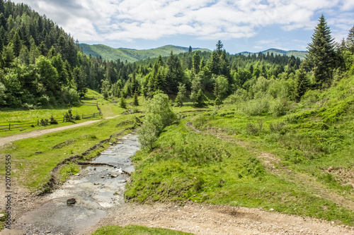 Foto op Canvas Pistache summer green mountain forest landscape with stream river