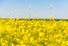 Three Wind Turbines Against Blue Sky In The French Countryside, With A Blurry Field Of Rapeseed In Bloom In The Foreground, Produce Clean Electricity From The Energy Of The Wind.