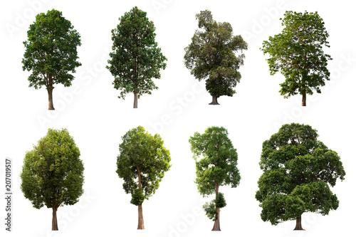 Fotografia, Obraz  Isolated tree on white background Set the group