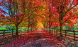 canvas print picture - Autumn trees lining driveway