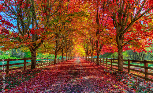 Photo Stands Landscapes Autumn trees lining driveway