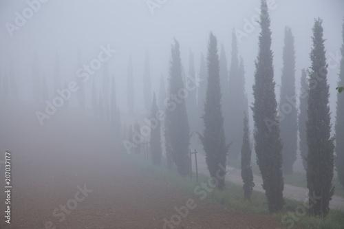 Foto row pf cypress trees fading in deep fog, Tuscany, Italy