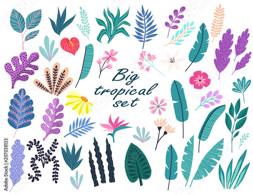zestaw-tropikalnych-kwiatow-lisci-palmowych