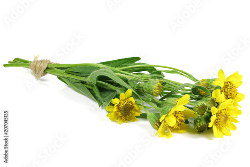 bunch of arnica montana isolated on white background Canvas Print