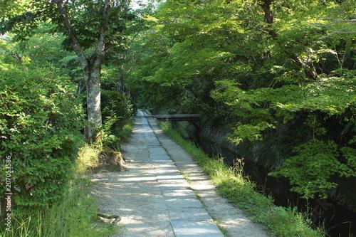 Foto op Plexiglas Groene 京都 哲学の道