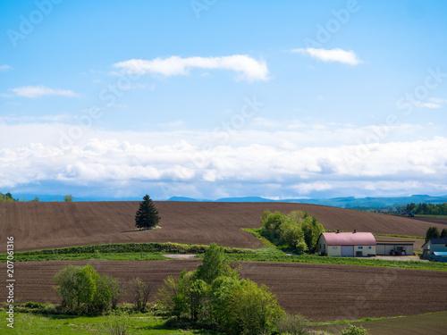 Foto op Aluminium Cappuccino 北海道の風景