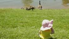 Baby Infant Girl Watching Baby...