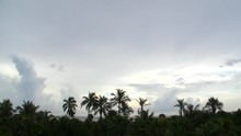 Tropical Monsoon Over Palm Tree Jungle Time Lapse