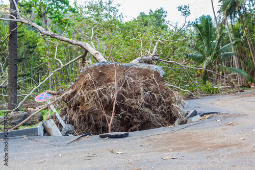 Fotografie, Obraz  arbre déraciné après le passage de la tempête Fakir, anse des Cascades, île de l