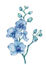Watercolor Blue Orchid Bouquet On White Background