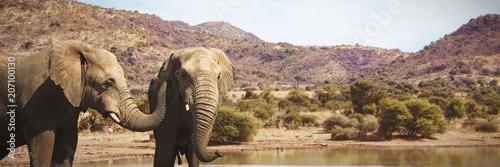 Obraz na plátně  Composite image of wild elephants grazing on grassland