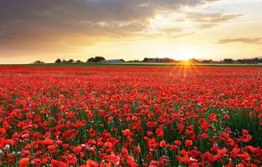 Poppy flowers meadow and nice sunset scene