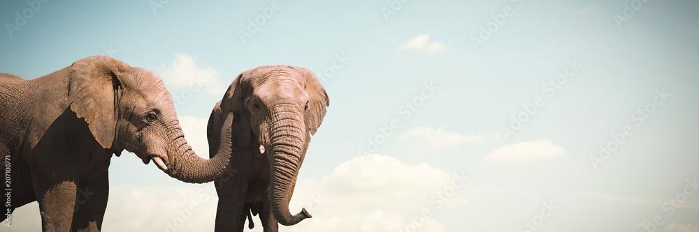Fotografie, Obraz Composite image of wild elephants grazing on grassland