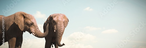 Composite image of wild elephants grazing on grassland Wallpaper Mural