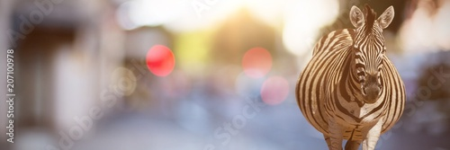 Fotografie, Obraz Composite image of a blurry street scene