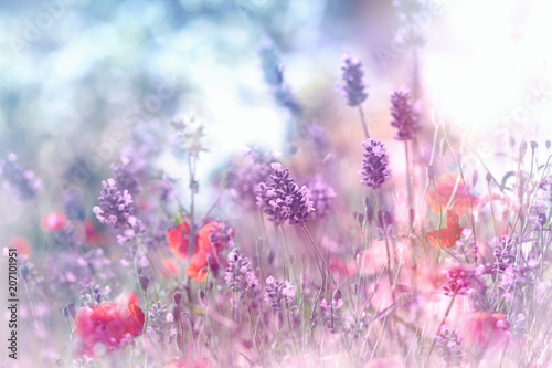 Selective and soft focus on lavender flower and poppy flower