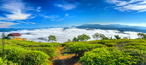 The morning scenery on the hillside of tea planted in the misty highlands below Fototapeta