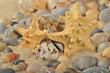 Starfishes, seashells and pebbles close-up