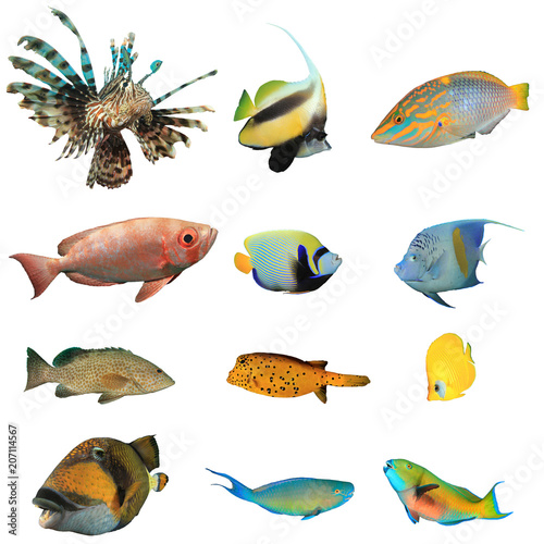 Spoed Foto op Canvas Onder water Collection tropical reef fish isolated on white background