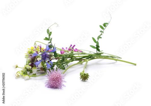 Foto op Plexiglas Weide, Moeras Colorful field flowers isolated on white background