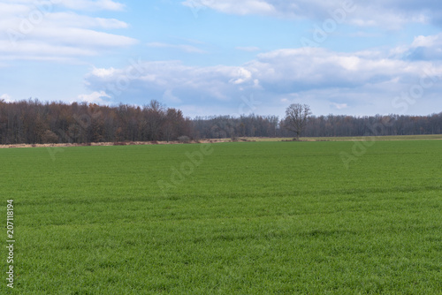 Foto op Aluminium Platteland Grassy Field on a Cloudy Day in Late Autumn. Countryside of Ontario, Canada.