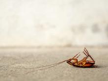 Dead Cockroach On Floor With C...
