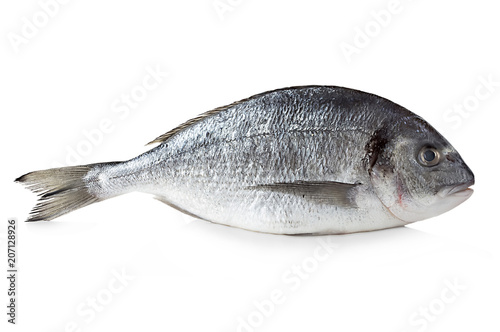 Fotografie, Obraz Fresh dorado isolated on a white background.