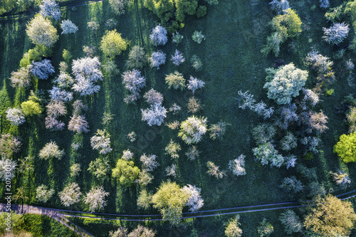 Germany, Baden-Wuerttemberg, Rems Valley, Aerial view of meadow with scattered fruit trees in spring