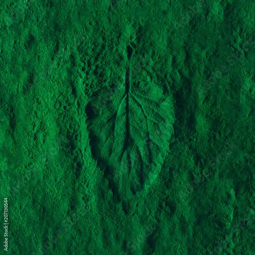 Valokuva  Creative nettle leaf impression on green powder