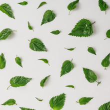 Creative Nettle Leaves Pattern. Minimal Nature Concept. Flat Lay. Green Herbs Texture.
