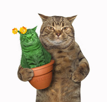 The Cat Holds A Pot With An Unusual Cactus . White Background.