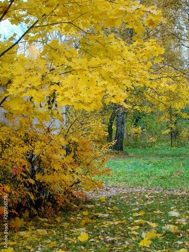 Foto op Canvas Herfst Beautiful autumn park view