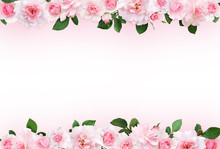Pink Background With Rose Flowers And Leaves