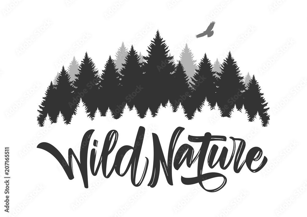 Fototapety, obrazy: Vector illustration: Hand drawn type lettering of Wild Nature with silhouette of Pine Forest and Hawk.