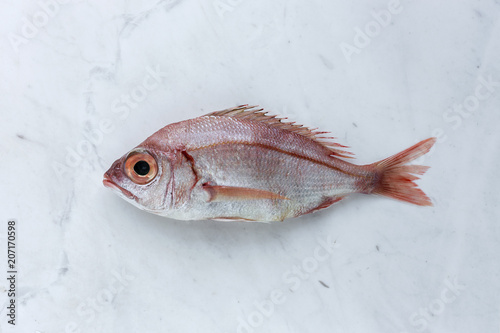 Red fish on white background