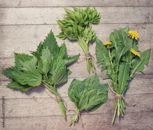 Aluminium Prints Condiments Bunches of spring edible wild herbs: nettle, dandelion, goutweed, plantain. Vegan food.