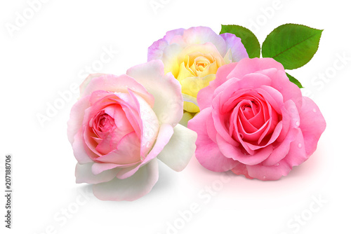 Deurstickers Roses Blumen 930