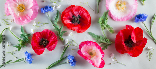Valokuva  Red and pink poppy and blue cornflower on a light green background