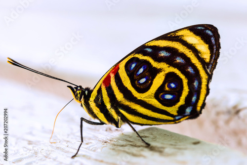 Foto op Plexiglas Macrofotografie Close up macro photography of a colorful butterfly