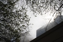 Looking Up Through The Mist At Tall Buildings Framed By Trees