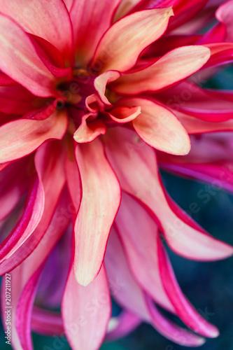 Fotobehang Macrofotografie Macro Floral Photo