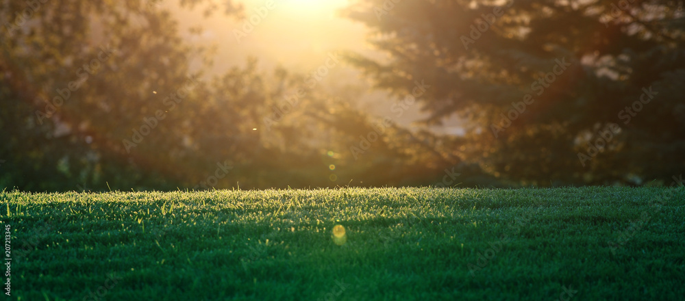 Fototapety, obrazy: A horizontal presentation of the sun setting through the trees on a grassy meadow.