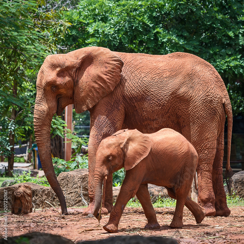 Fotografía  Close up Elephants.