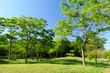 宮城県富谷市 公園の風景