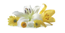 Beautiful White And Yellow Flo...
