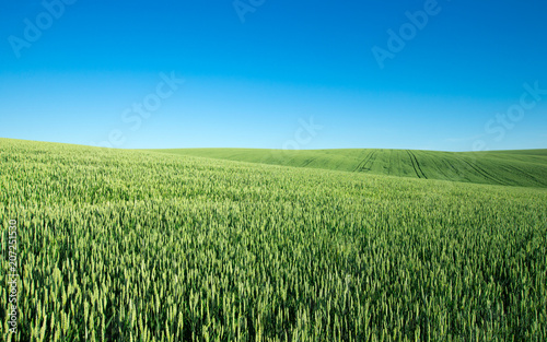 Tuinposter Platteland field of green grass on a background sky