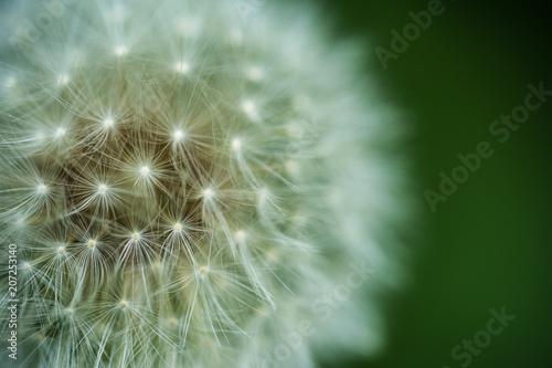 Fotobehang Paardebloem Dandelion