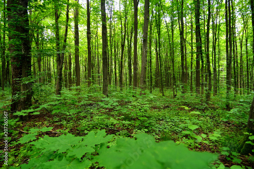 Beautiful Forest - 207265567