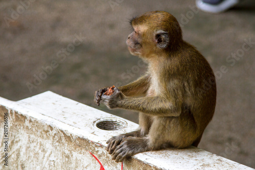 Monkeys, Kuala Lumpur, Malaysia Canvas Print