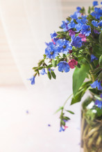 Close-up Part Of Bouquet Of Wild Forested Lungwort In Glass Vase On Light Background.